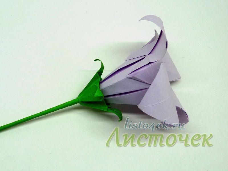Чашелистик может быть намного меньше цветка. В этом случае цветок и чашелистик крепятся с помощью клея на стебле