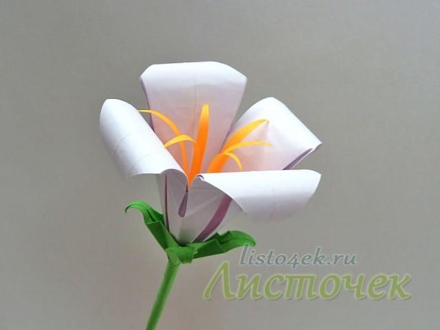 Цветок лилии с заостренными тычинками